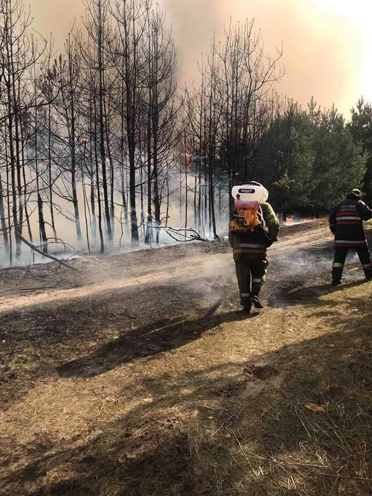 На Полтавщині горить 8 гектарів соснового лісу_1