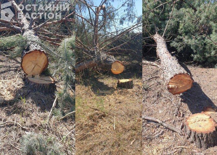 Дерева, які чимось завинили перед патріотами Турецької Республіки і перед «патріотами» України на території орендованої у Полтавської ОДА ділянки.