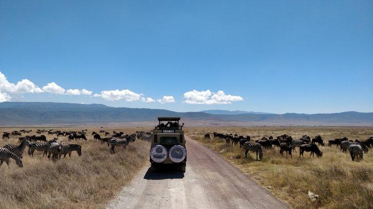 Чому мігрують тварини?_2