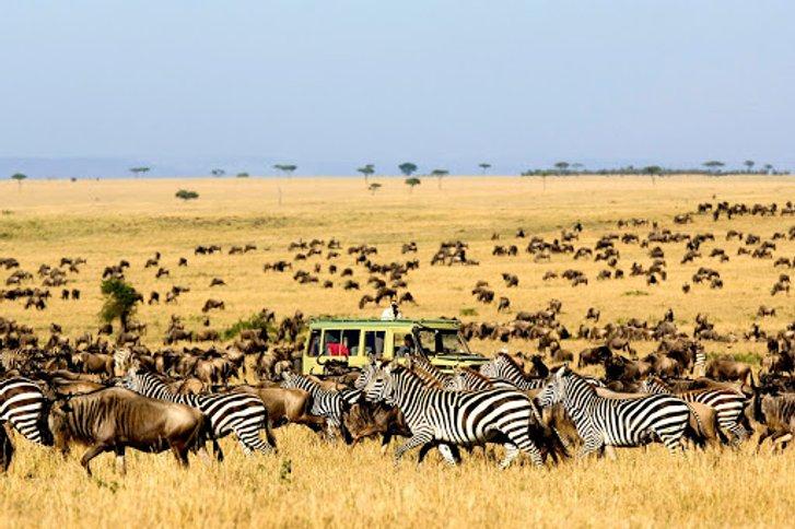 Чому мігрують тварини?_1