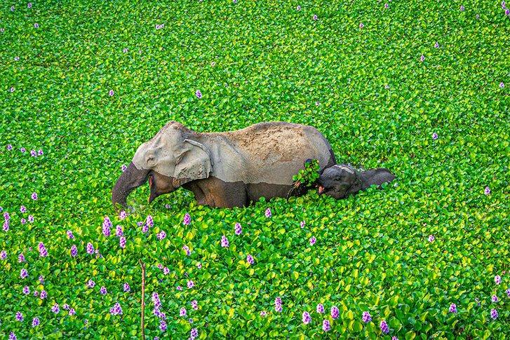 Визначено найкумедніші світлини дикої природи 2020 року_6