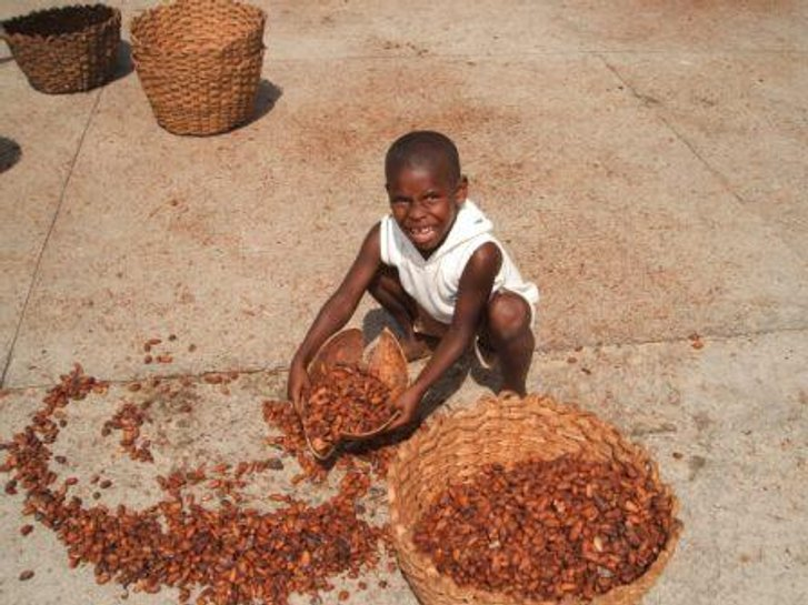 Висока ціна шоколаду — наслідок експлуатації дитячої праці_2