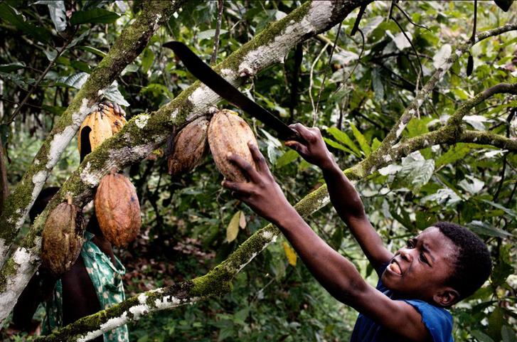 Висока ціна шоколаду — наслідок експлуатації дитячої праці_3