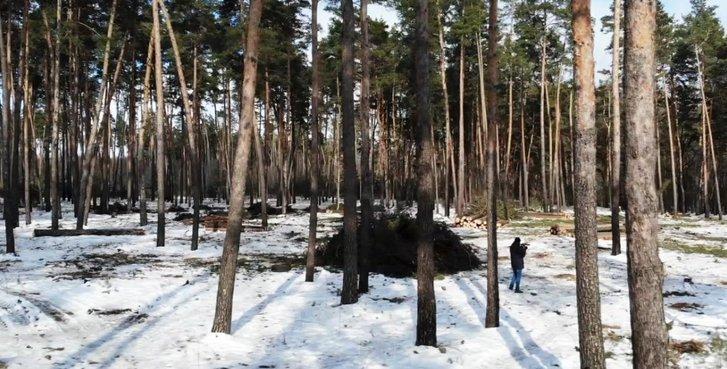 Селяни Миргородського району вимагають покарати «лісову мафію»_2