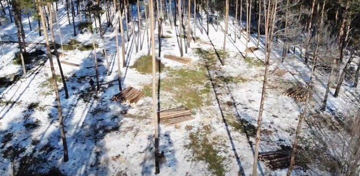 Наслідки діяльності дроворубів у лісі поблизу села Гаркушинці