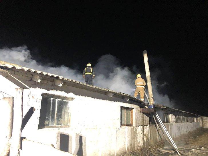 Дві сотні корів врятували у пожежі на Полтавщині_1