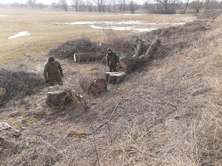 Біля Котельви вирубали дерев на 3 мільйони_1