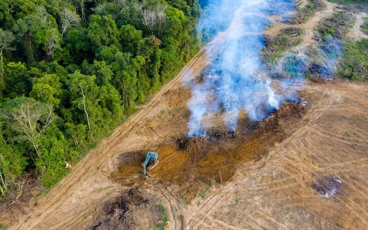 Амазонські ліси – місце двобою дереворубів і природоохоронців_1