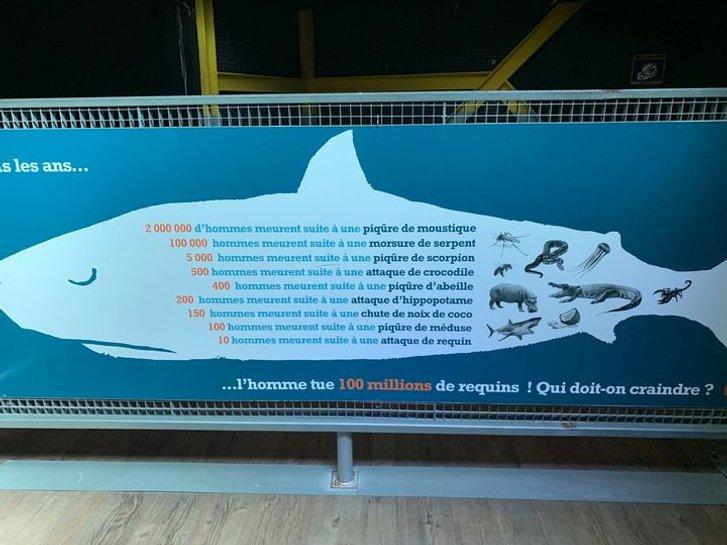 Людство вбиває близько 100 мільйонів акул щорічно_1