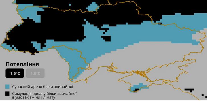 В Україні дикі білки опинилися під загрозою зникнення_1