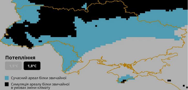 В Україні дикі білки опинилися під загрозою зникнення_2