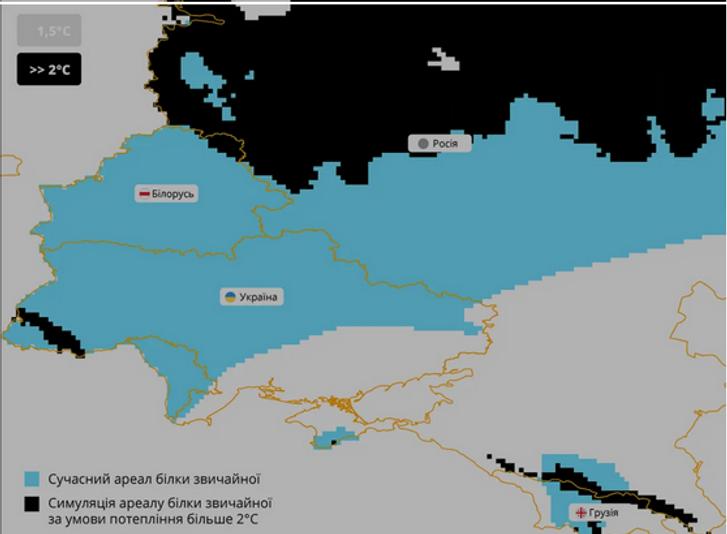 В Україні дикі білки опинилися під загрозою зникнення_4