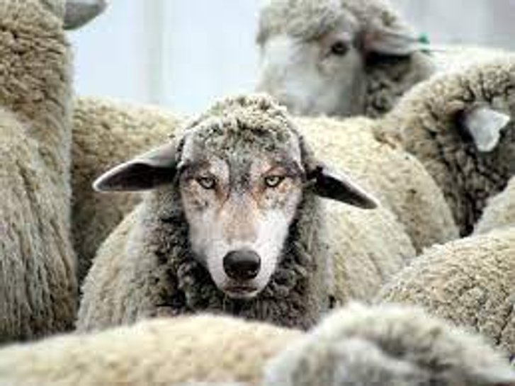 """Промовка про вовка: """"Слуги"""" у ВР намагалися повністю вивести телебачення з-під дії закону про мову_1"""
