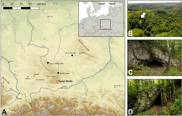Археолоґи знайшли у Польщі рештки карельської дівчинки родом із Фінляндії_2