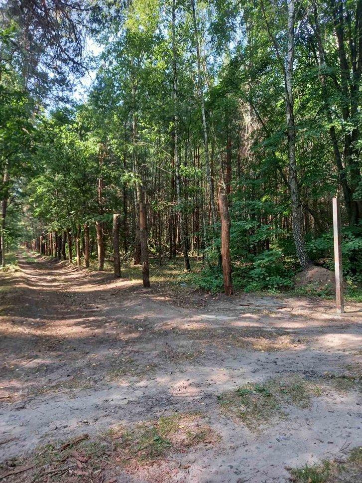 Огородження лісу в селі Лютенька Гадяцького району