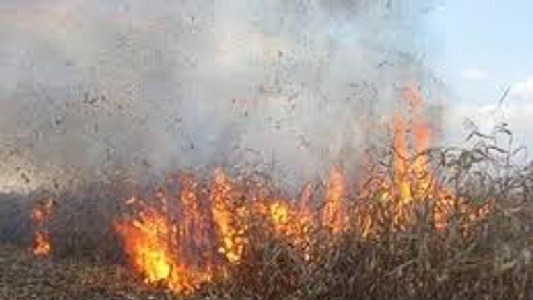 Вчора на Полтавщині горіли поля і палали торф'яники