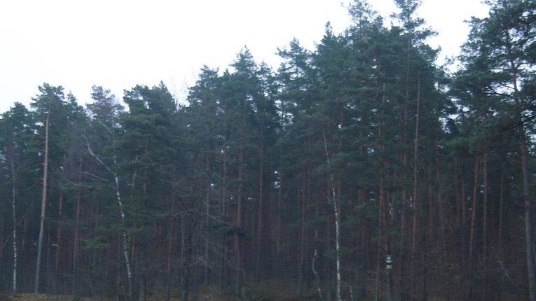 На Полтавщині браконьєри вбили директора лісгоспу і покалічили головного мисливствознавця під час рейду
