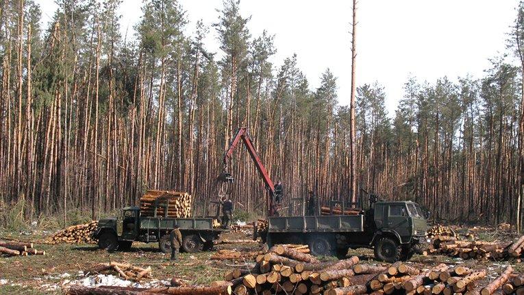 Незаконна вирубка лісофонду Полтавщини