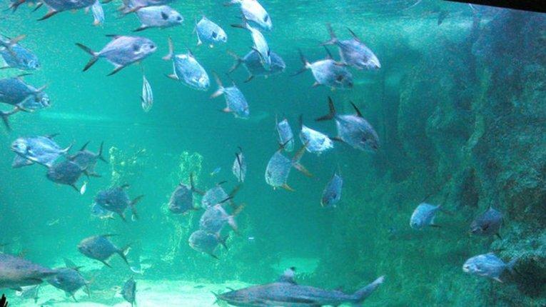 За 45 років морські популяції скоротилися вдвічі