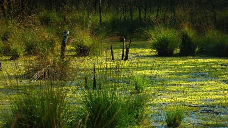 86 тисяч га землі Полтавщини займають болота