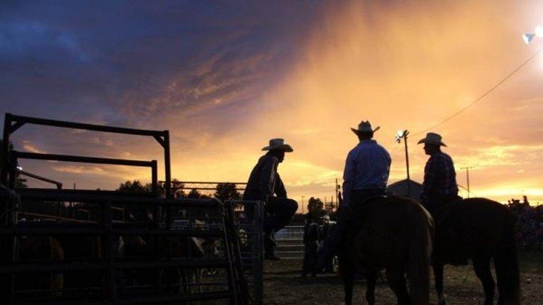 Рейдерство в аграрному секторі набуло небаченого розмаху