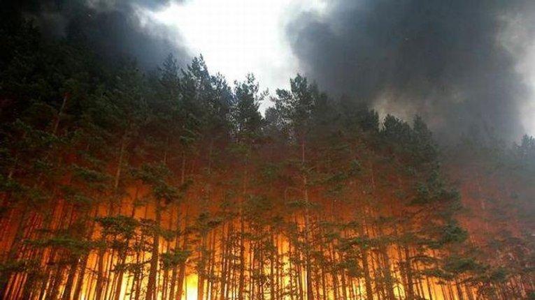 У 22 рази більше вже горіли полтавські ліси цього року, ніж минулого