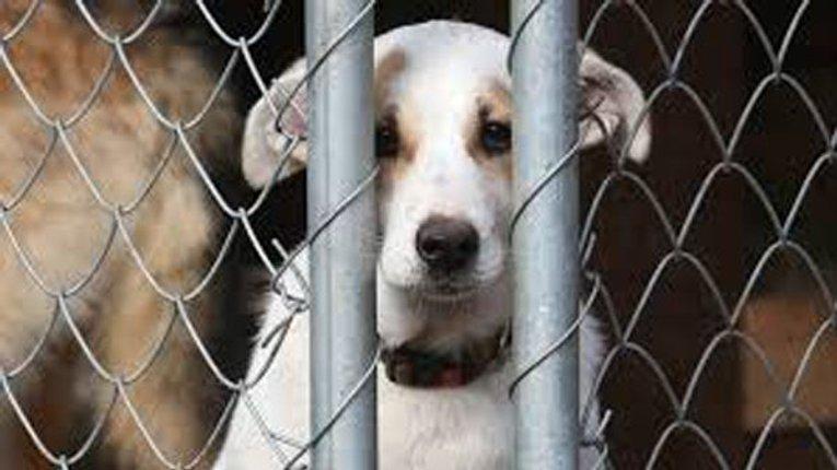 Відсьогодні за жорстоке поводження з тваринами саджатимуть на 3-8 років