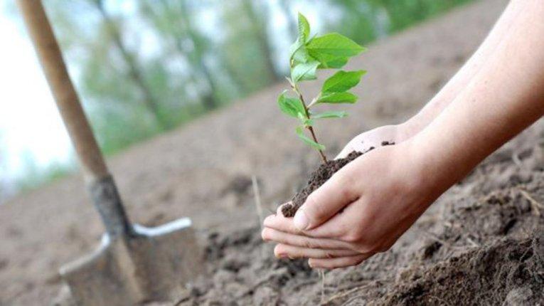 Міську владу просять посприяти озелененню Полтави