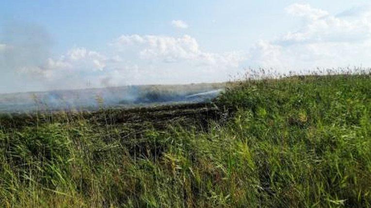 Вогонь знищив поле у Кременчуцькому районі