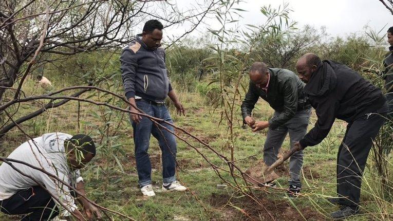 Глобальне озеленіння: як відроджують ліси у Ефіопії