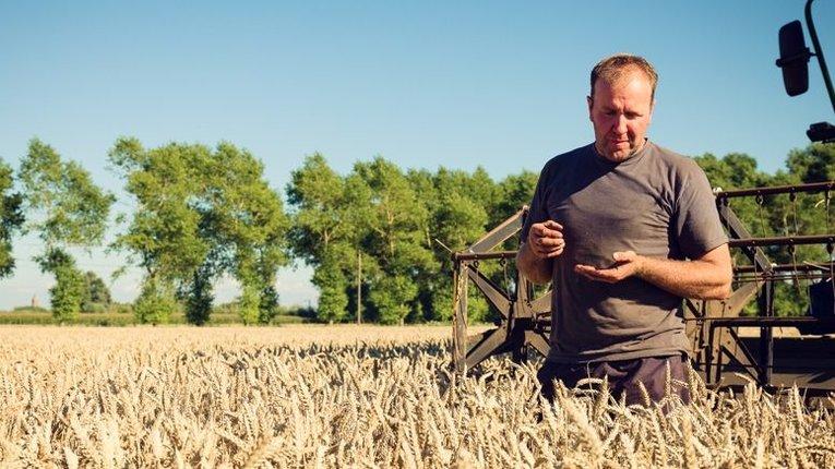 Уряд видав багатомільйонну компенсацію українським сільгоспвиробникам
