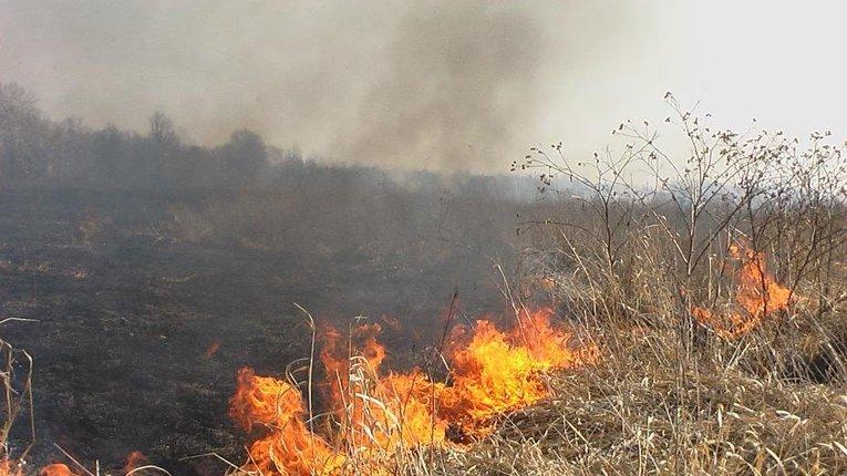 За самочинне спалювання стерні неодмінно будуть штрафні санкції, — Котелевська РДА