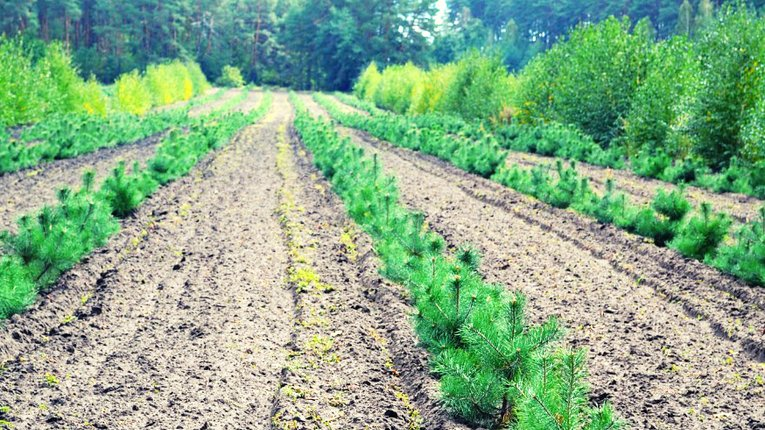Лісники Полтавщини відзвітували про появу нового лісу
