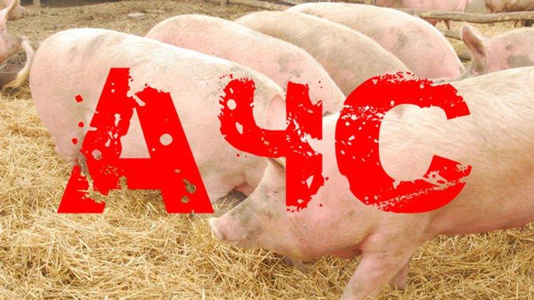 У Пирятинському районі зберігається небезпека через африканську чуму свиней