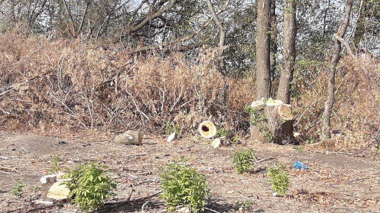 Селяни Лубенського району скаржаться на незаконну вирубку лісу
