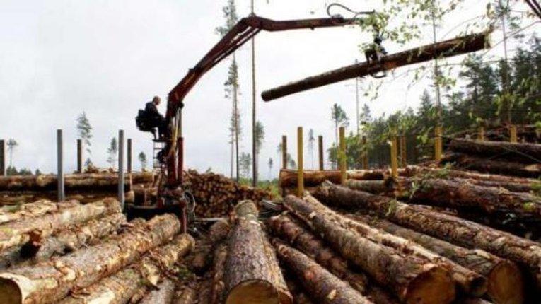 Хто виграє від скасування мораторію на експорт лісоматеріалів?