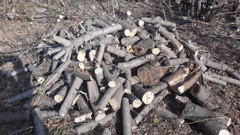 Екологи знову звинувачують «Агентство місцевих доріг» у незаконній вирубці