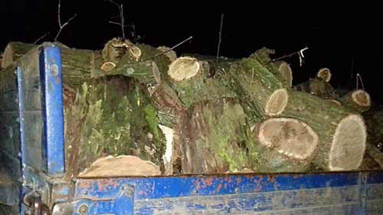 У Лохвицькому районі впіймали крадіїв лісу