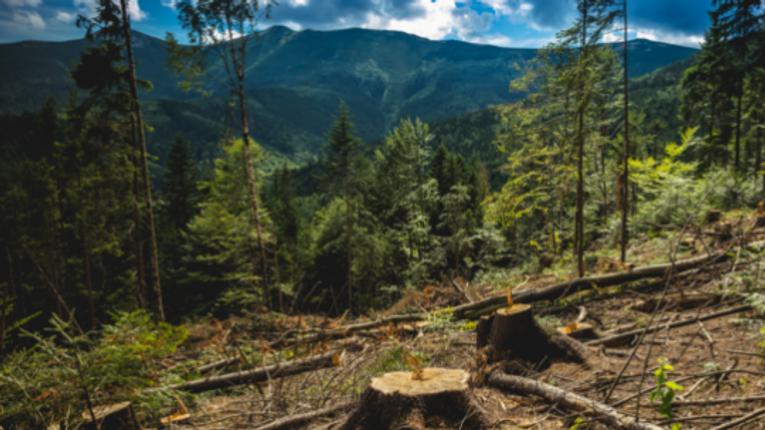 Законодавчі зміни лише посприяють вирубці Карпат, – екологи