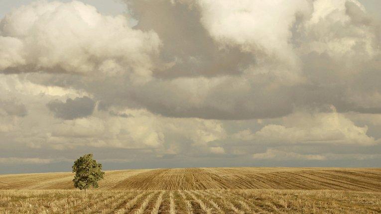 За 2017 учасникам АТО на Полтавщині виділили 3630 гектарів землі