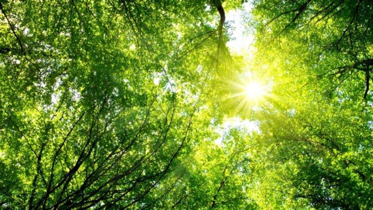 Науковці довели, що дерева розмовляють