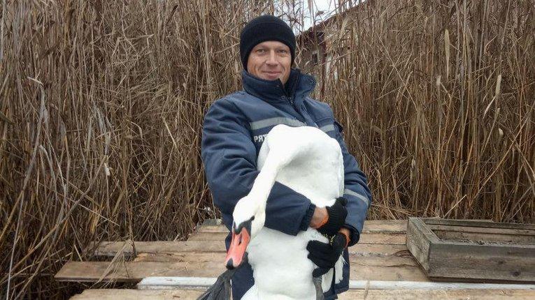 Неподалік Великої Багачки надзвичайники врятували змерзлого лебедя