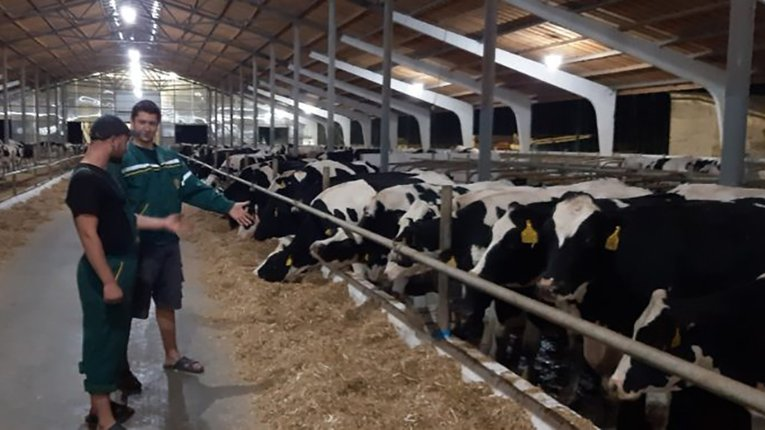 Молочно-товарна ферма