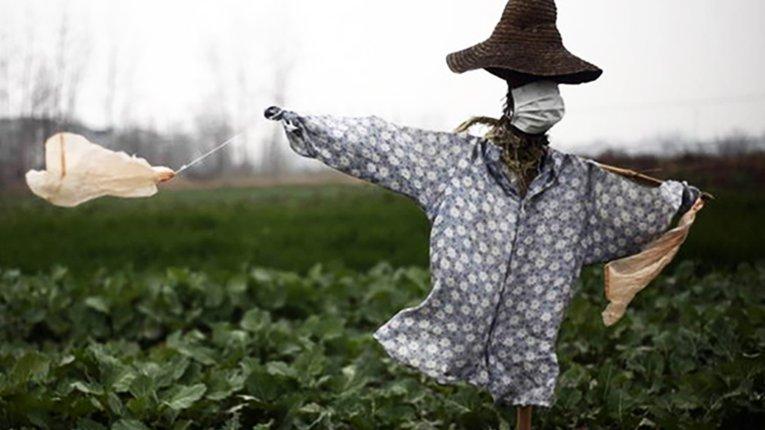 Коронавірус як причина банкрутствадрібних фермерських господарств у КНР