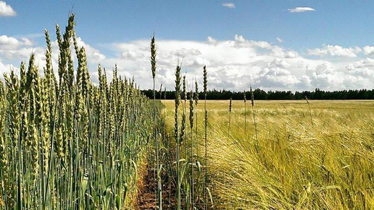 Кременчуцька прокуратура планує повернути у комунальну власність майже 100 гектарів землі