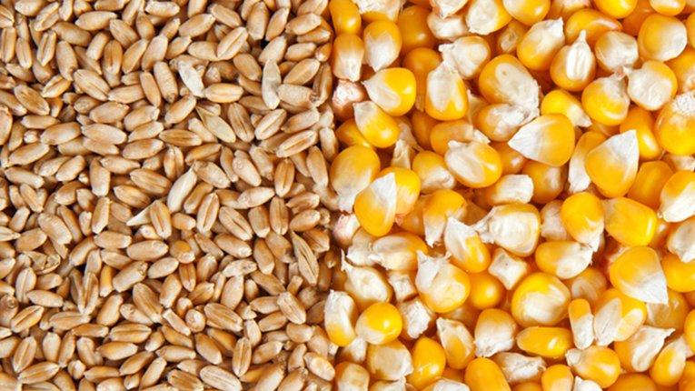 Міністерство аграрної політики відзвітувало про зростання експорту зернових
