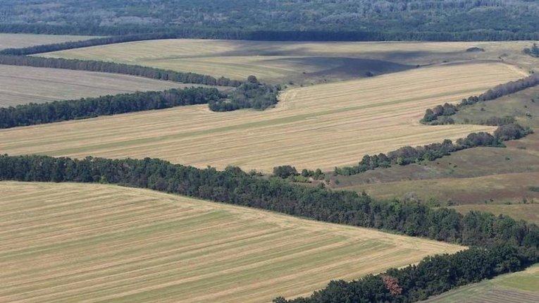 Лісосмуги в Україні можна буде брати в оренду
