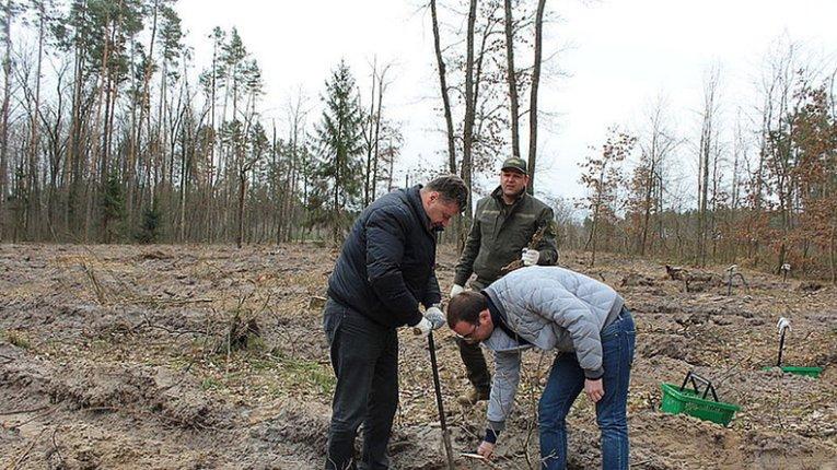 Лісове господарство Житомирської області поповнилося новими деревами