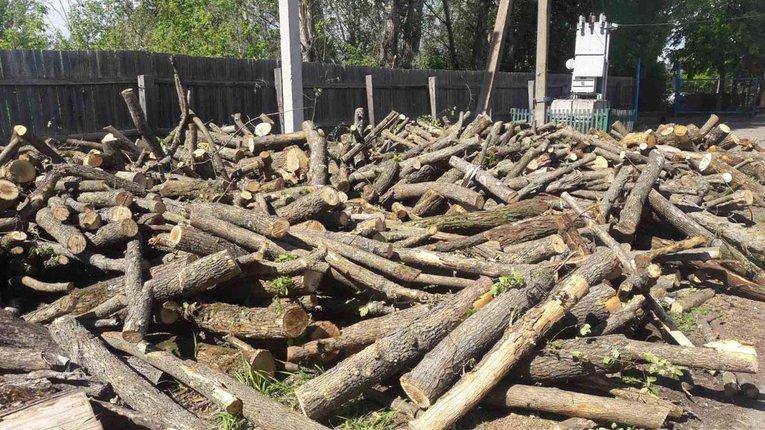 Мешканця Чутівського району підозрюють у незаконній вирубці лісу