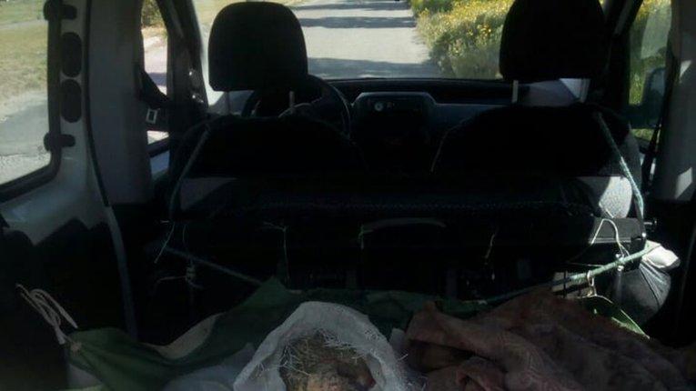 Кілограми незаконно виловленого сома збувають у Горішніх Плавнях